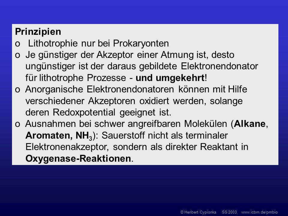 Prinzipien o Lithotrophie nur bei Prokaryonten. o Je günstiger der Akzeptor einer Atmung ist, desto.