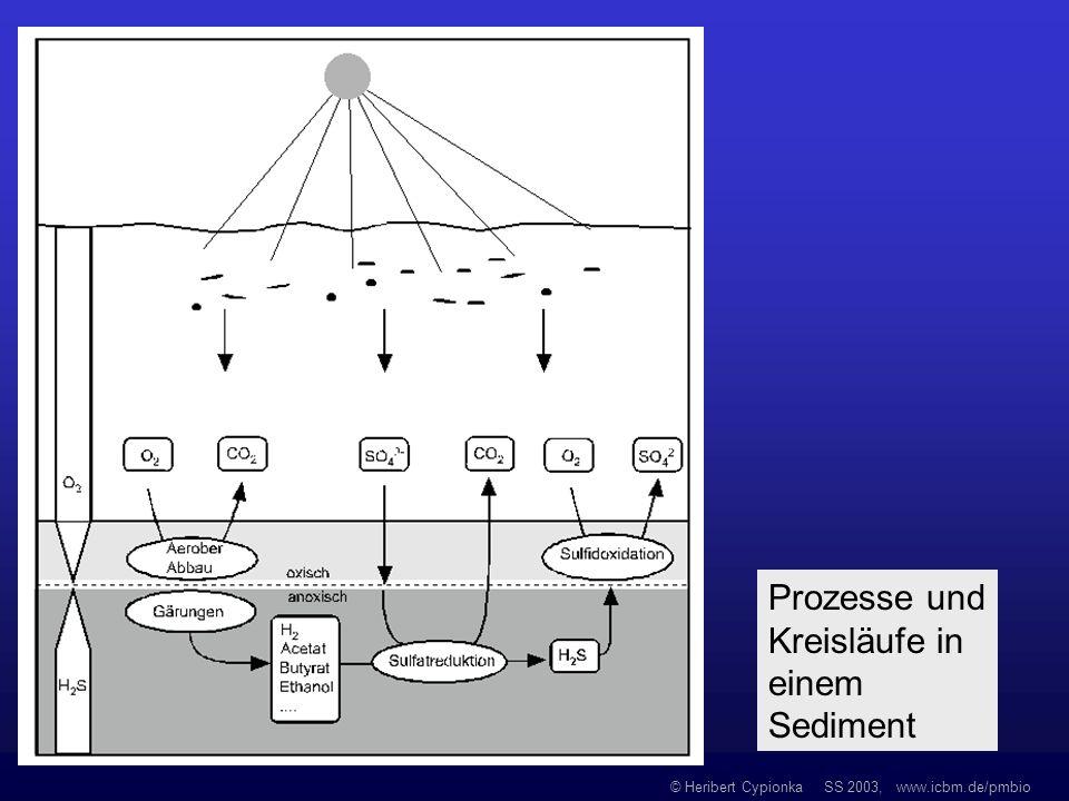 Prozesse und Kreisläufe in einem Sediment