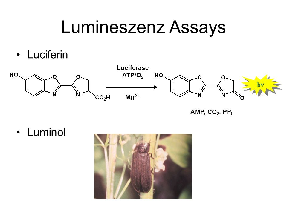 Lumineszenz Assays Luciferin Luminol Luciferase ATP/O2 Mg2+