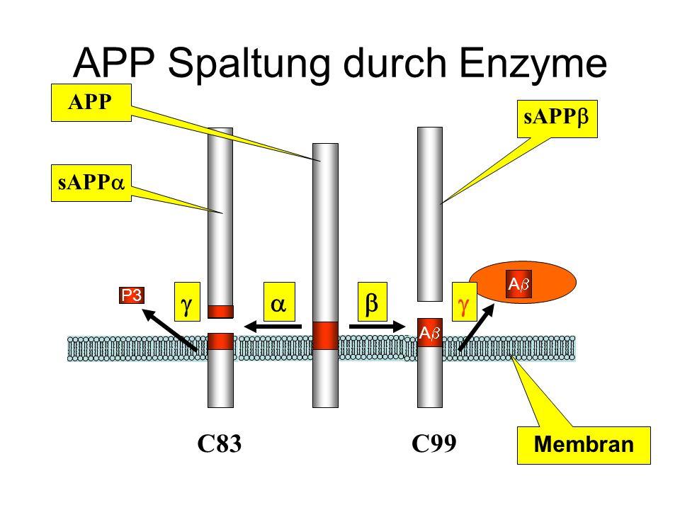 APP Spaltung durch Enzyme