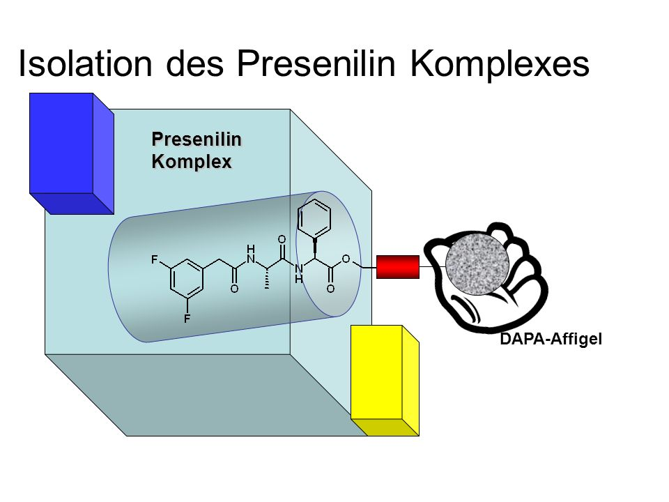 Isolation des Presenilin Komplexes