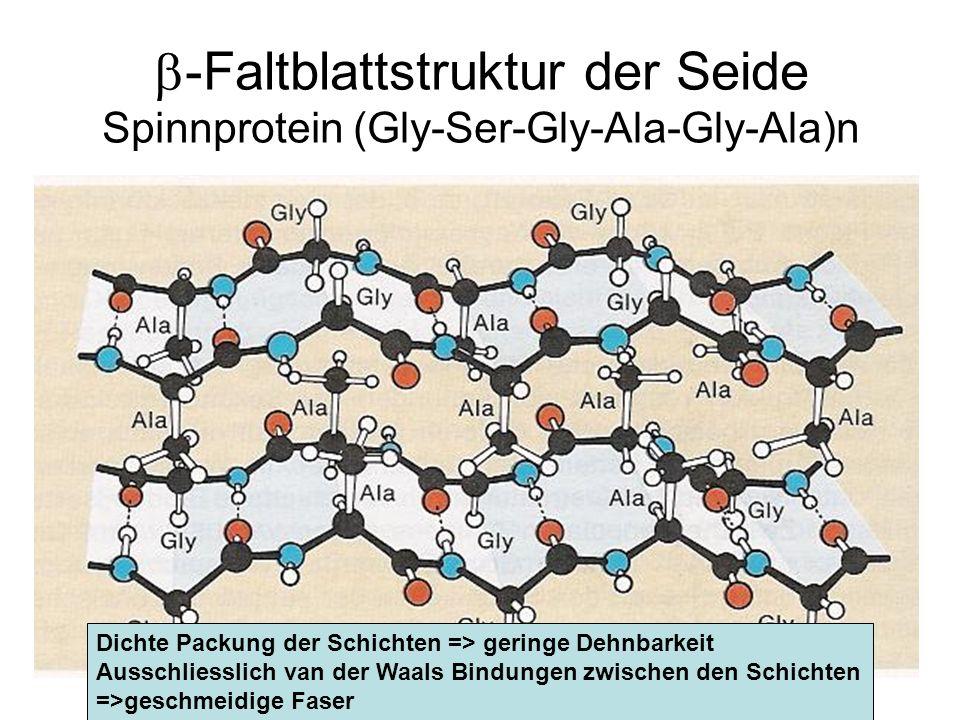 b-Faltblattstruktur der Seide Spinnprotein (Gly-Ser-Gly-Ala-Gly-Ala)n