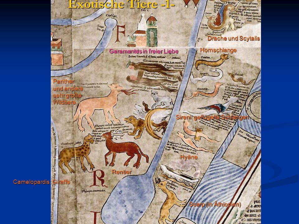 Exotische Tiere -1- Drache und Scytalis Hornschlange