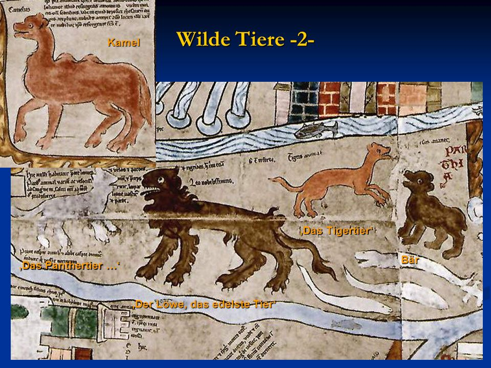 Wilde Tiere -2- Kamel 'Das Tigertier' Bär 'Das Panthertier …'
