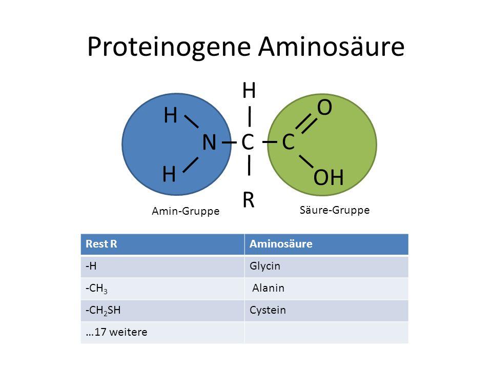 Proteinogene Aminosäure