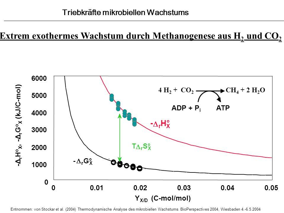 Extrem exothermes Wachstum durch Methanogenese aus H2 und CO2