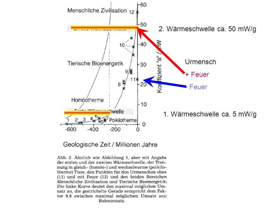 2. Wärmeschwelle ca. 50 mW/g Urmensch + Feuer - Feuer 1. Wärmeschwelle ca. 5 mW/g