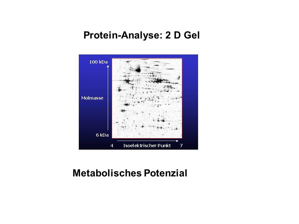 Protein-Analyse: 2 D Gel