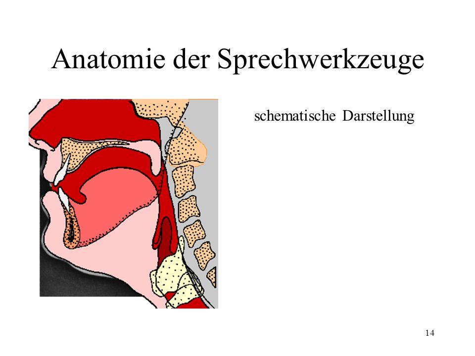 Anatomie der Sprechwerkzeuge