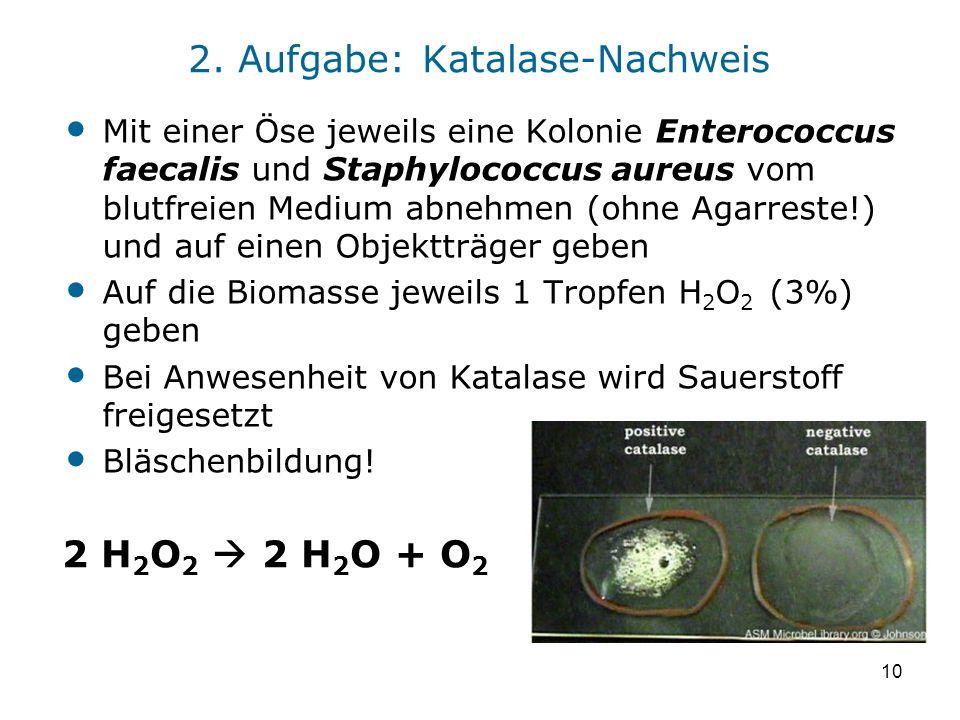 2. Aufgabe: Katalase-Nachweis