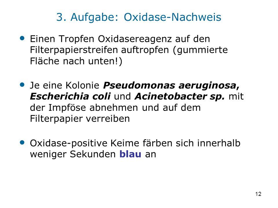 3. Aufgabe: Oxidase-Nachweis