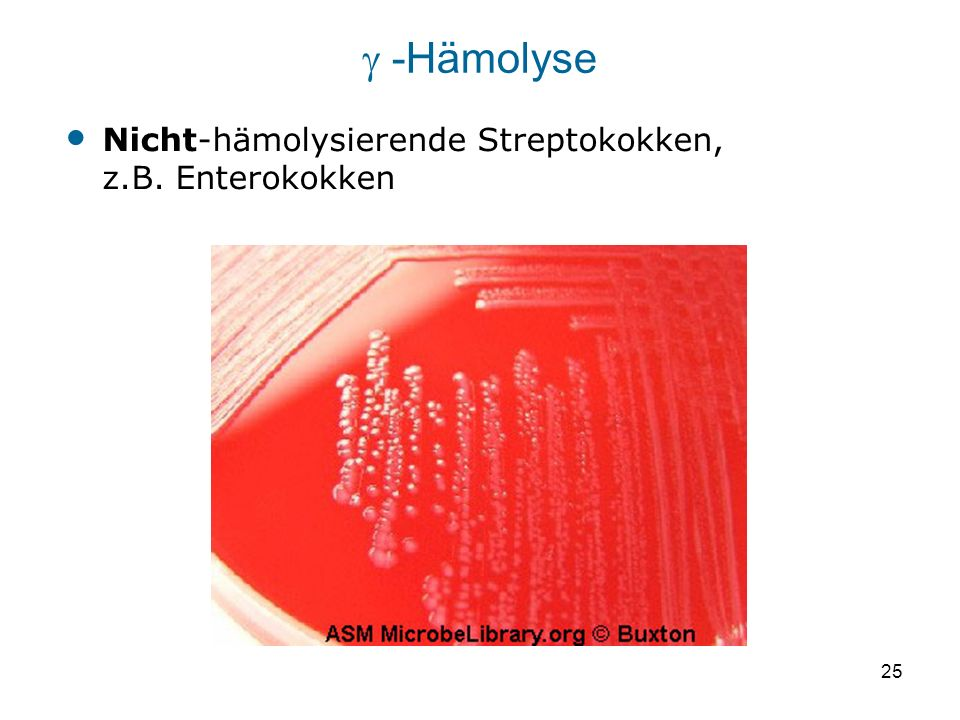  -Hämolyse Nicht-hämolysierende Streptokokken, z.B. Enterokokken