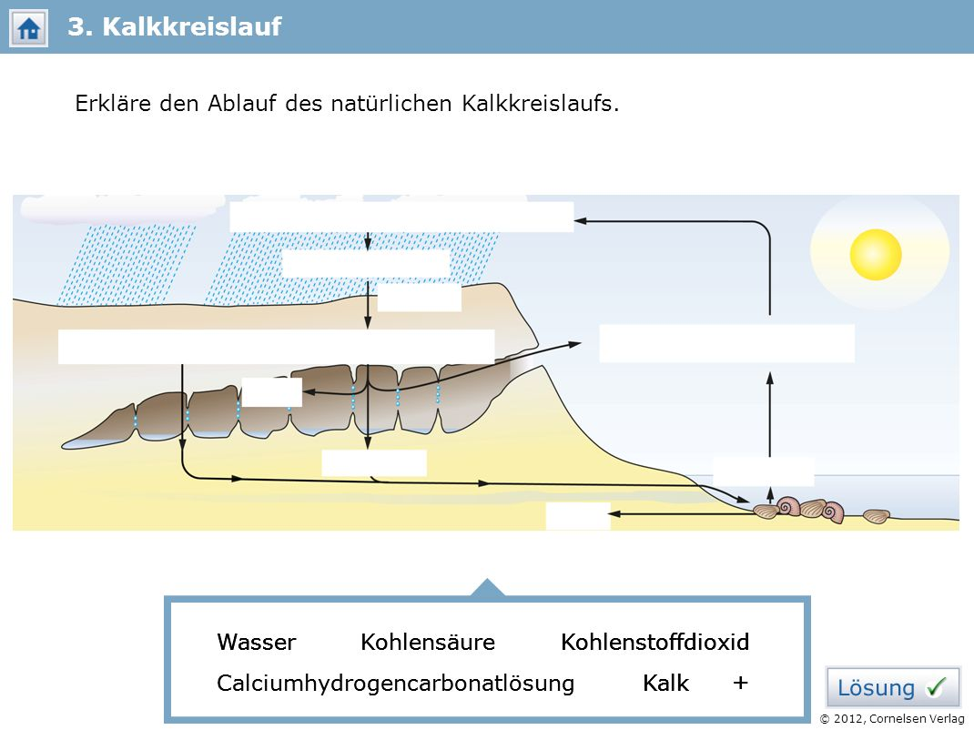 3. Kalkkreislauf Erkläre den Ablauf des natürlichen Kalkkreislaufs.