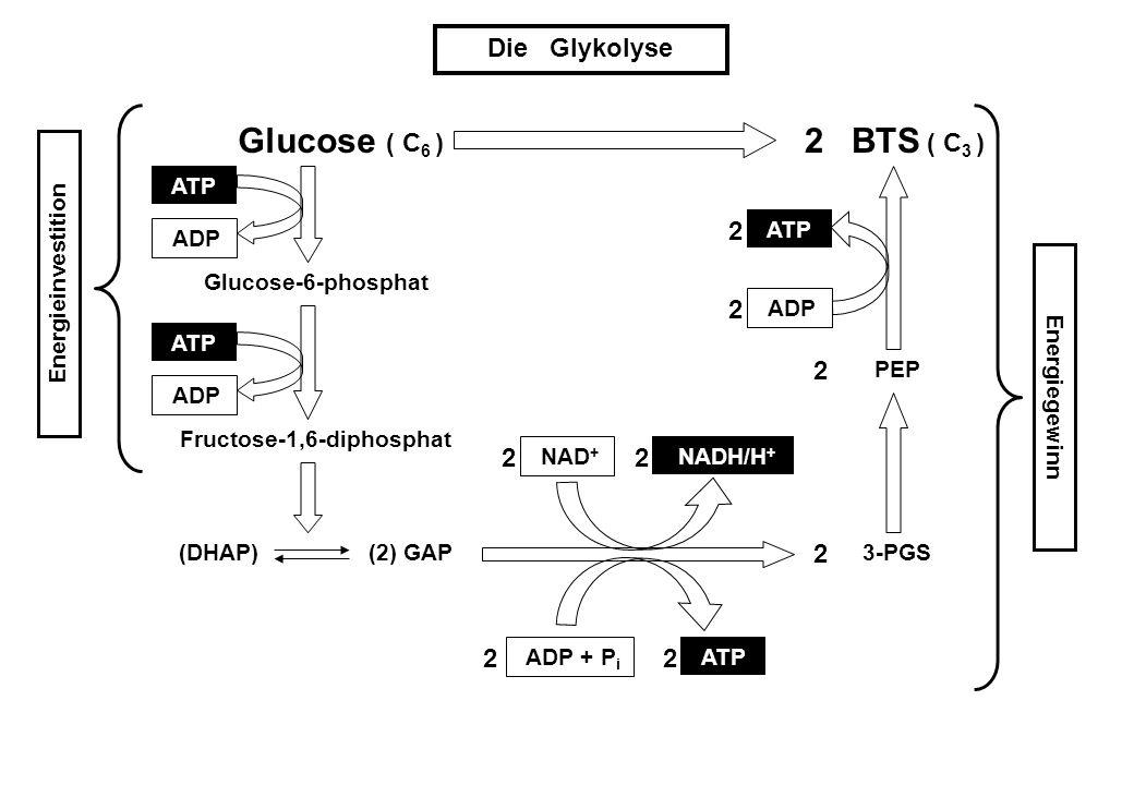 Fructose-1,6-diphosphat