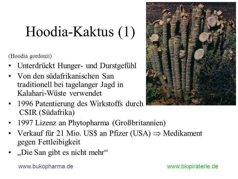 Hoodia-Kaktus (1) Unterdrückt Hunger- und Durstgefühl