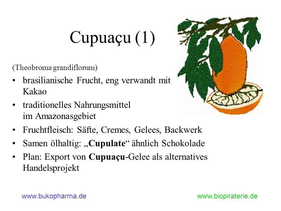 Cupuaçu (1) brasilianische Frucht, eng verwandt mit Kakao