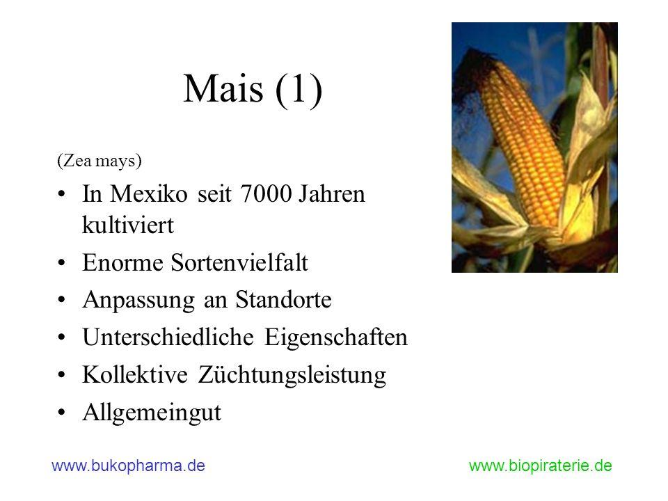 Mais (1) In Mexiko seit 7000 Jahren kultiviert Enorme Sortenvielfalt