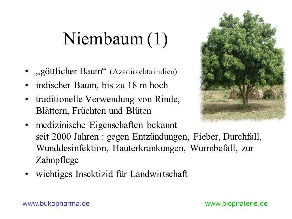 """Niembaum (1) """"göttlicher Baum (Azadirachta indica)"""