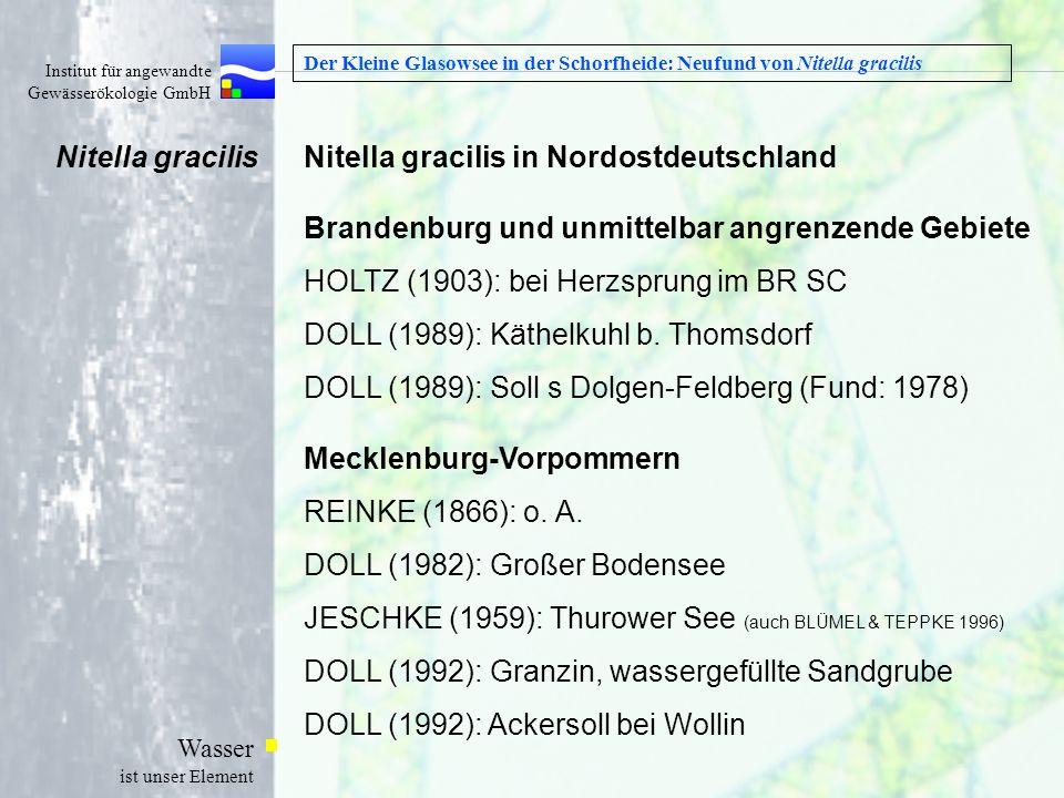 Nitella gracilis in Nordostdeutschland