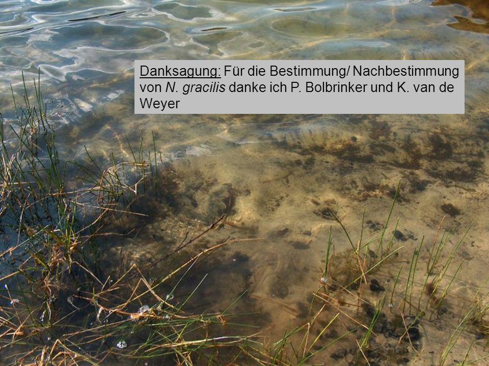 Dystrophe Seen in Brandenburg. Danksagung: Für die Bestimmung/ Nachbestimmung von N. gracilis danke ich P. Bolbrinker und K. van de Weyer.