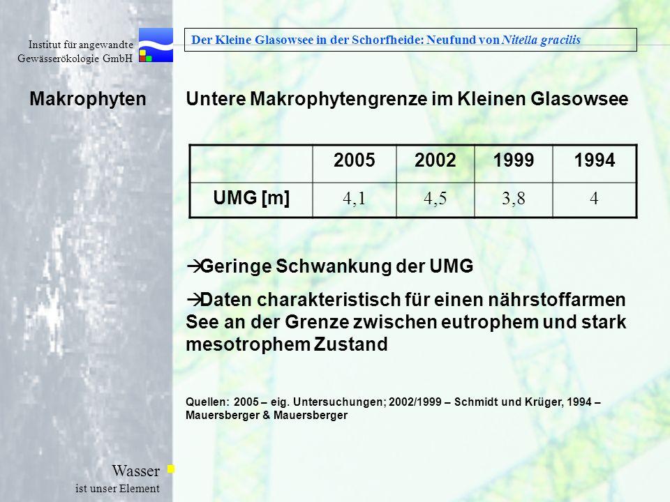 Untere Makrophytengrenze im Kleinen Glasowsee