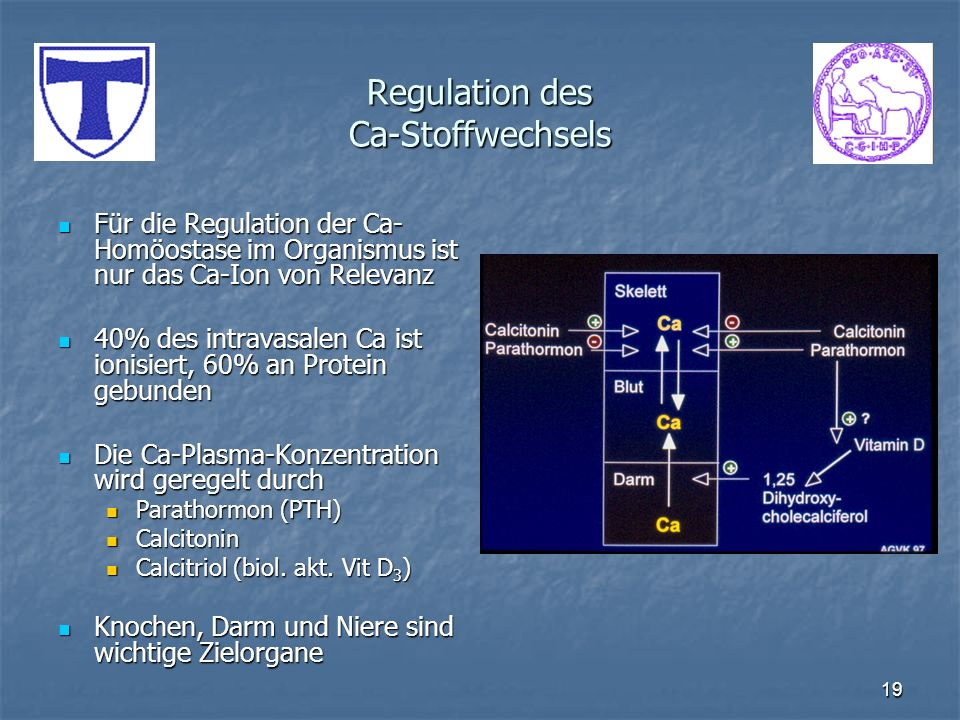 Regulation des Ca-Stoffwechsels