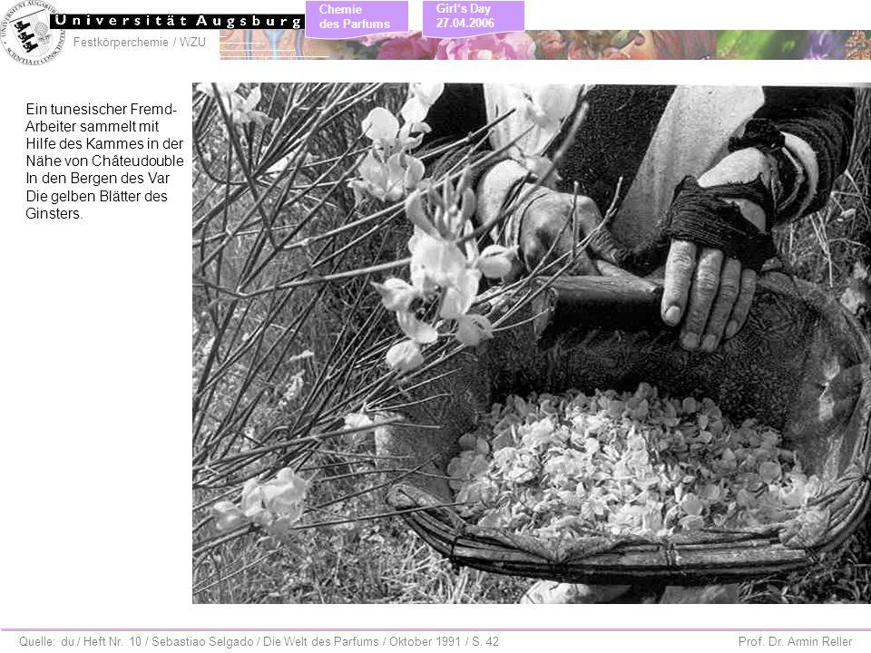 Ein tunesischer Fremd- Arbeiter sammelt mit Hilfe des Kammes in der