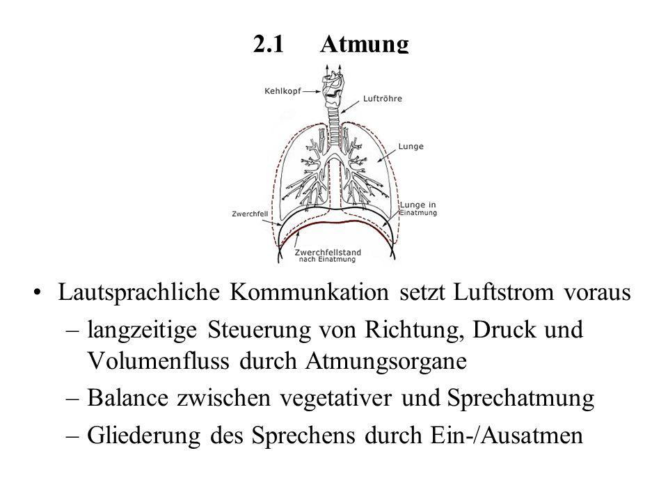 2.1 Atmung Lautsprachliche Kommunkation setzt Luftstrom voraus. langzeitige Steuerung von Richtung, Druck und Volumenfluss durch Atmungsorgane.