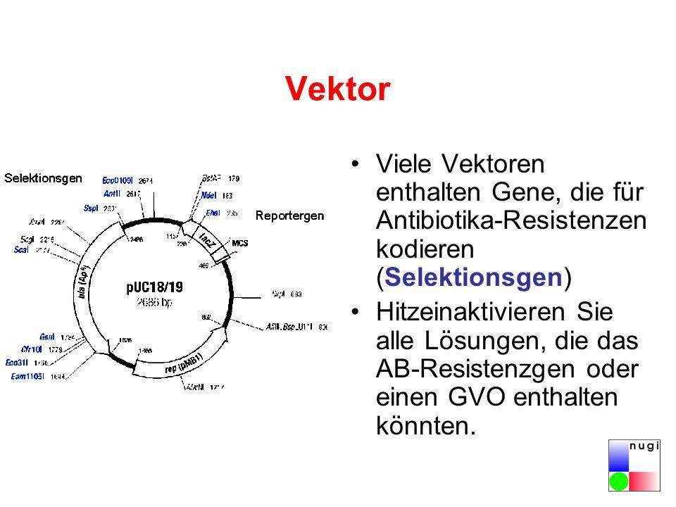 Vektor Viele Vektoren enthalten Gene, die für Antibiotika-Resistenzen kodieren (Selektionsgen)