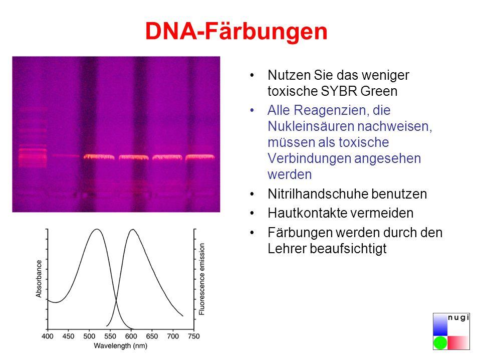 DNA-Färbungen Nutzen Sie das weniger toxische SYBR Green