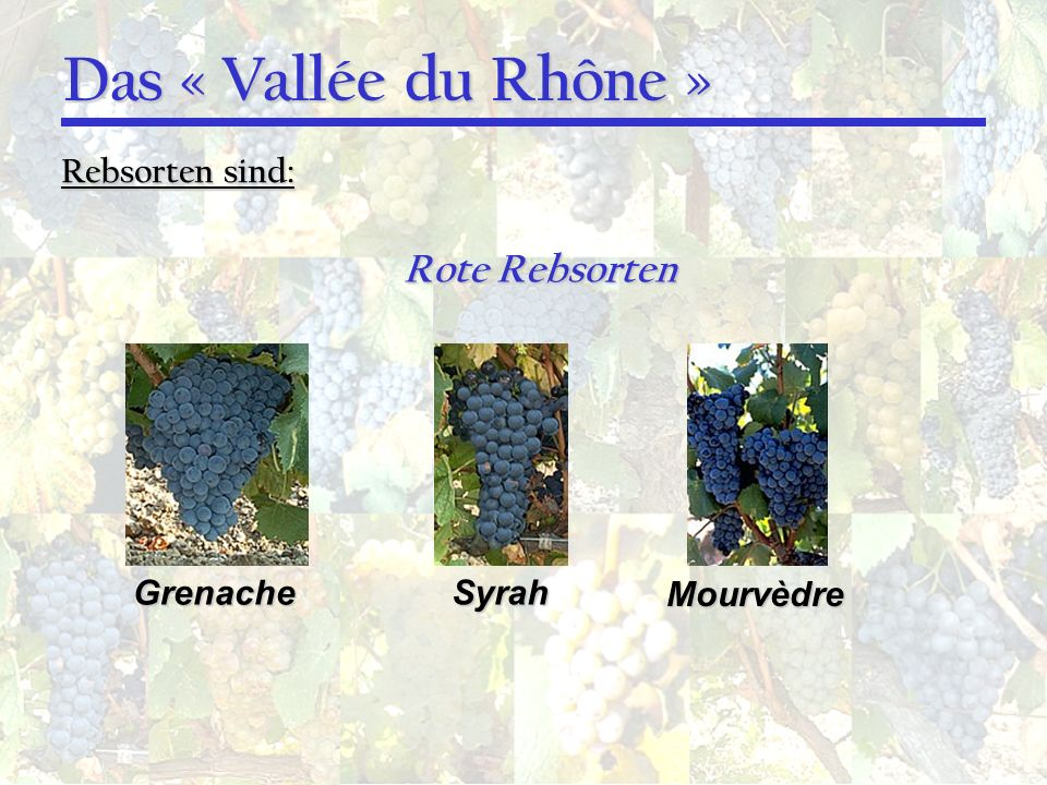 Das « Vallée du Rhône » Rote Rebsorten Rebsorten sind: Grenache Syrah