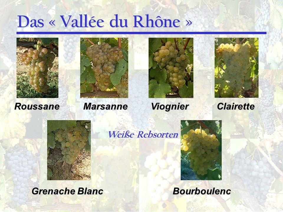 Das « Vallée du Rhône » Roussane Marsanne Viognier Clairette