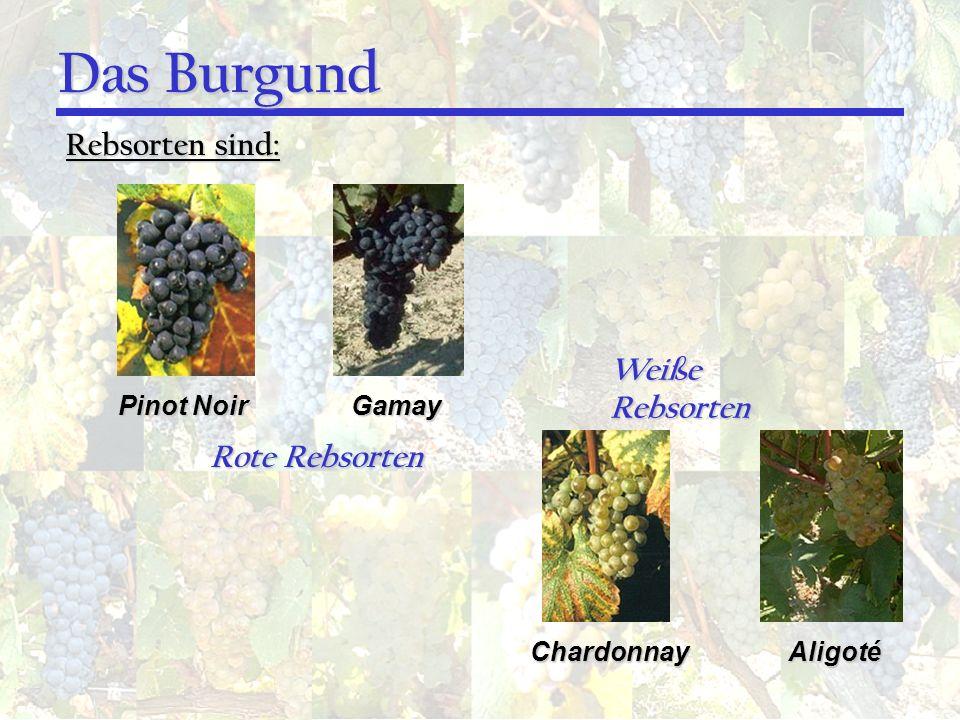 Das Burgund Rebsorten sind: Weiße Rebsorten Rote Rebsorten Pinot Noir