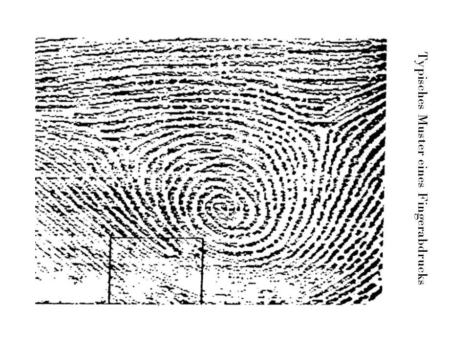 Typisches Muster eines Fingerabdrucks
