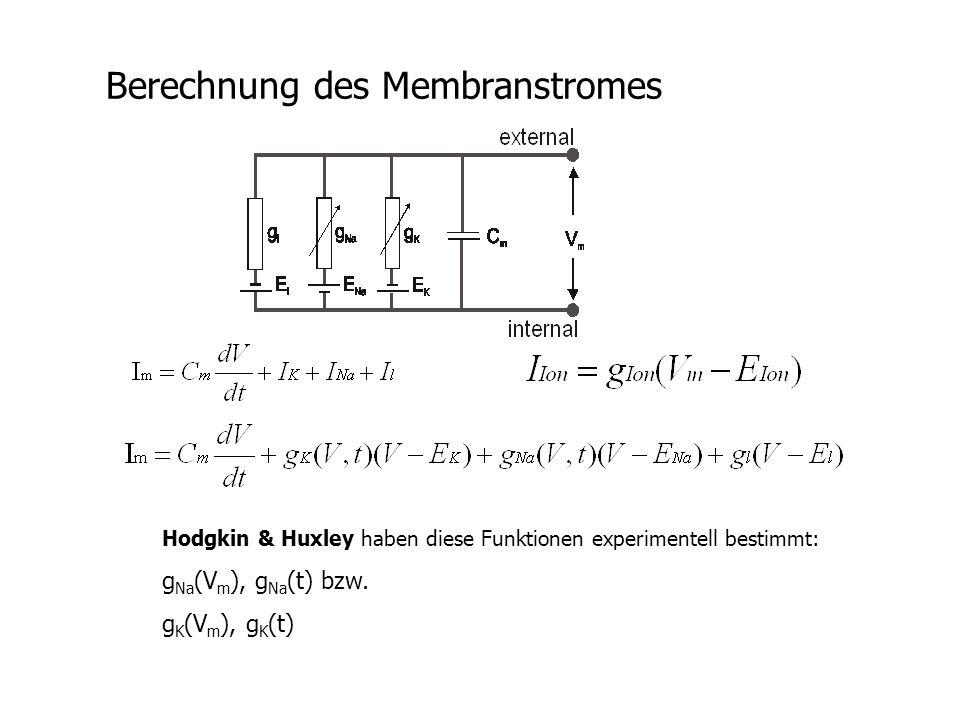 Berechnung des Membranstromes