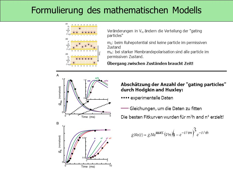 Formulierung des mathematischen Modells