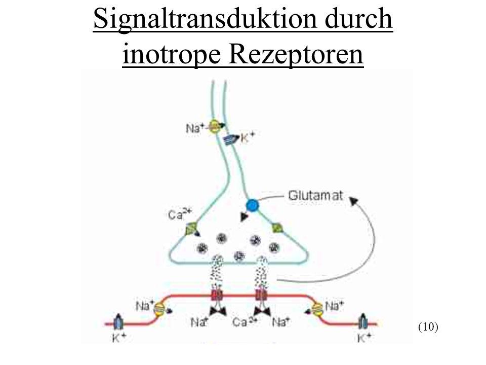 Signaltransduktion durch inotrope Rezeptoren