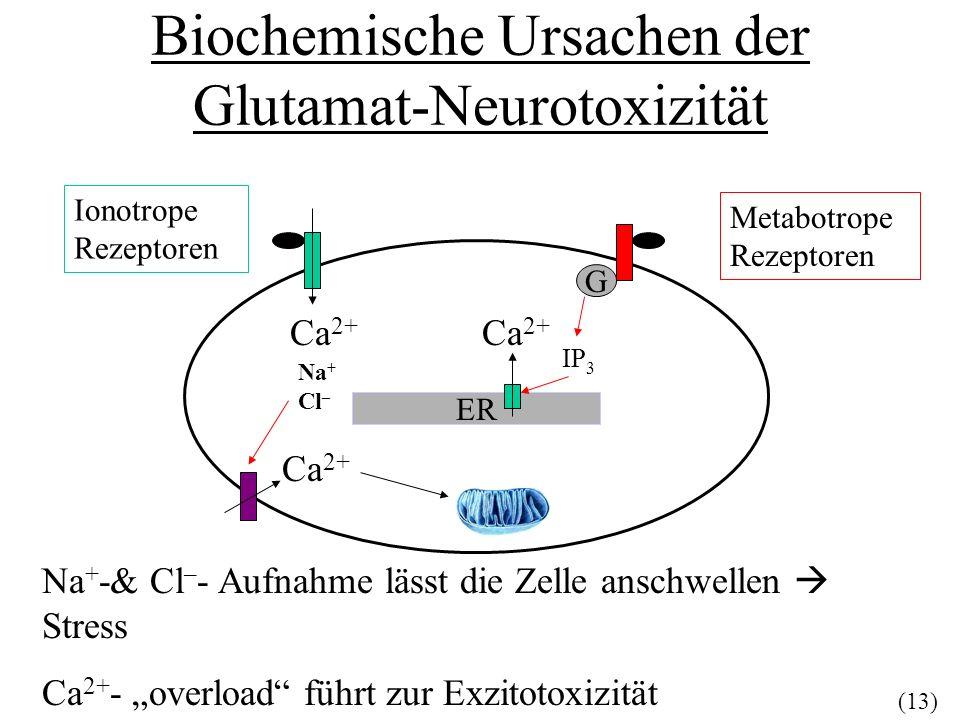 Biochemische Ursachen der Glutamat-Neurotoxizität