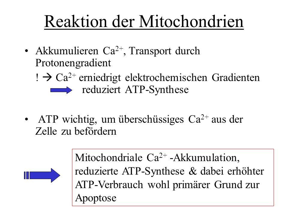 Reaktion der Mitochondrien