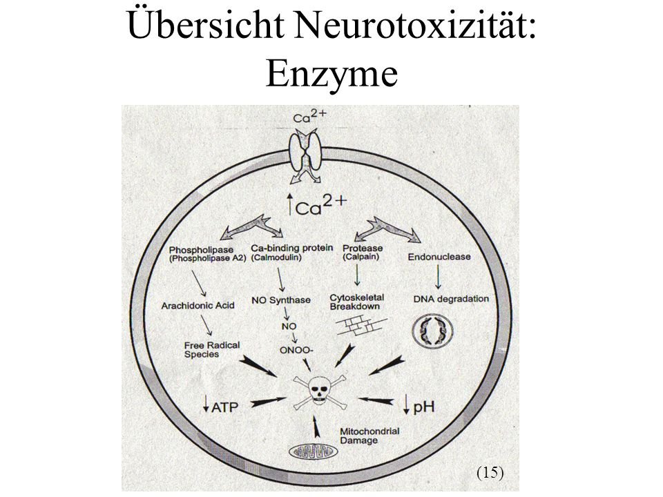Übersicht Neurotoxizität: Enzyme