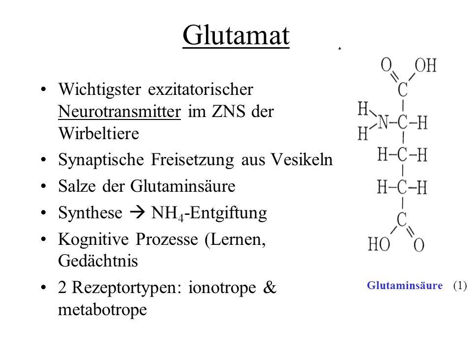Glutamat Wichtigster exzitatorischer Neurotransmitter im ZNS der Wirbeltiere. Synaptische Freisetzung aus Vesikeln.