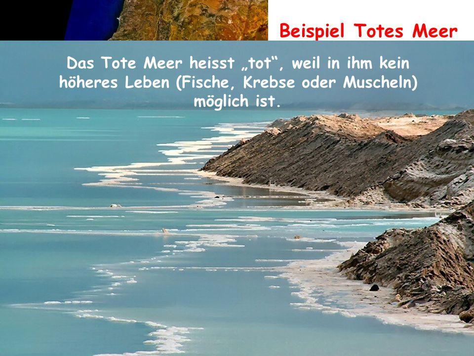 """Beispiel Totes Meer Das Tote Meer heisst """"tot , weil in ihm kein"""