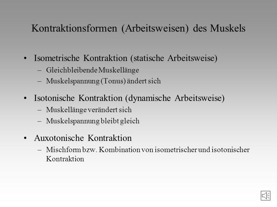 Kontraktionsformen (Arbeitsweisen) des Muskels