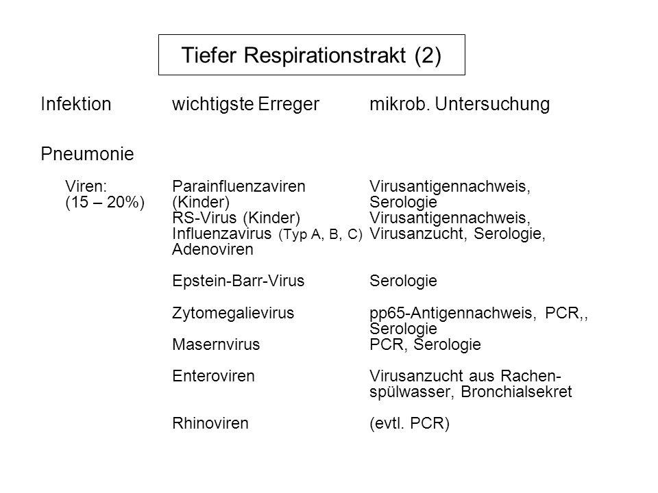 Tiefer Respirationstrakt (2)
