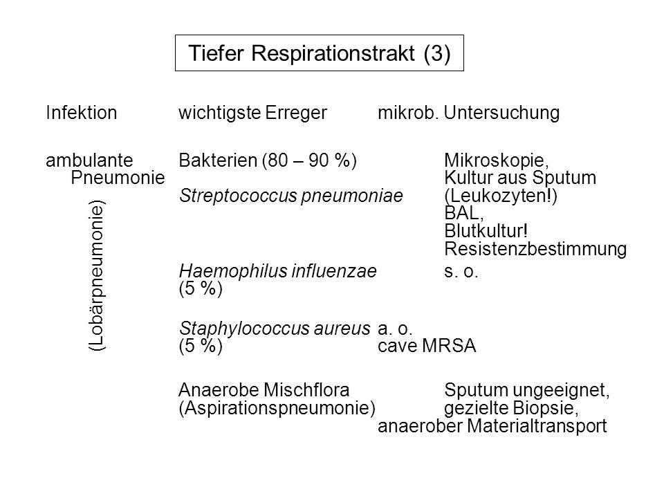 Tiefer Respirationstrakt (3)