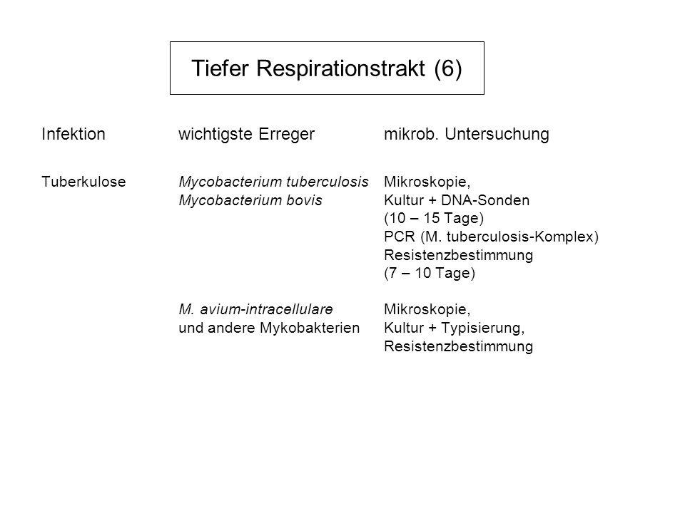 Tiefer Respirationstrakt (6)