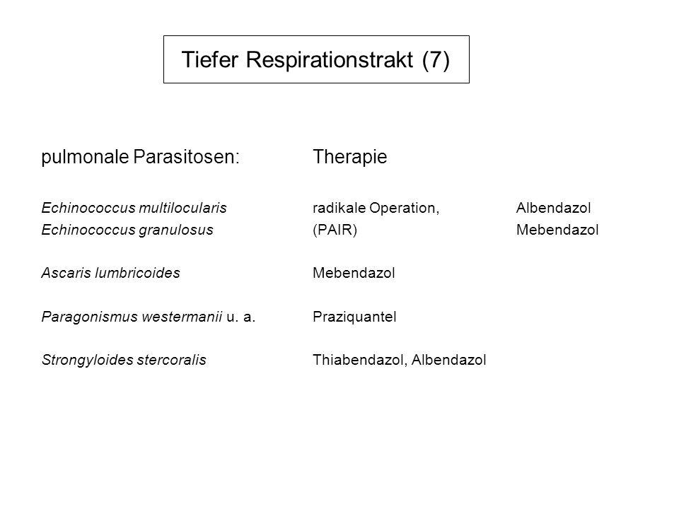 Tiefer Respirationstrakt (7)