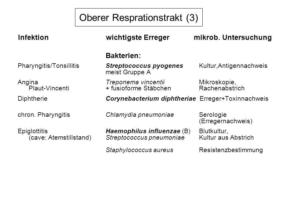 Oberer Resprationstrakt (3)