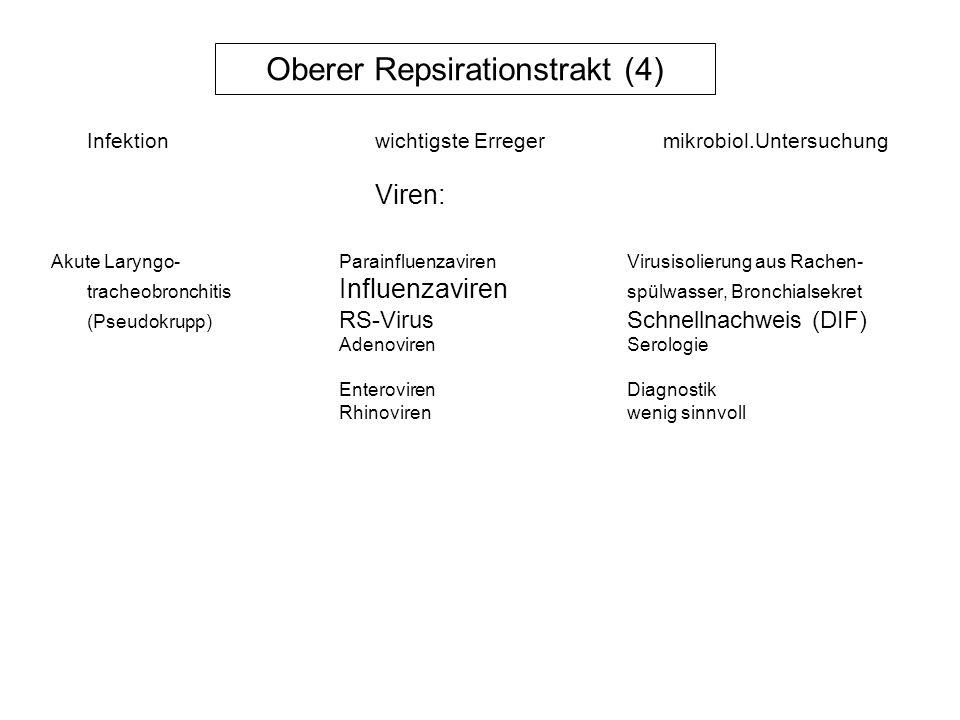 Oberer Repsirationstrakt (4)