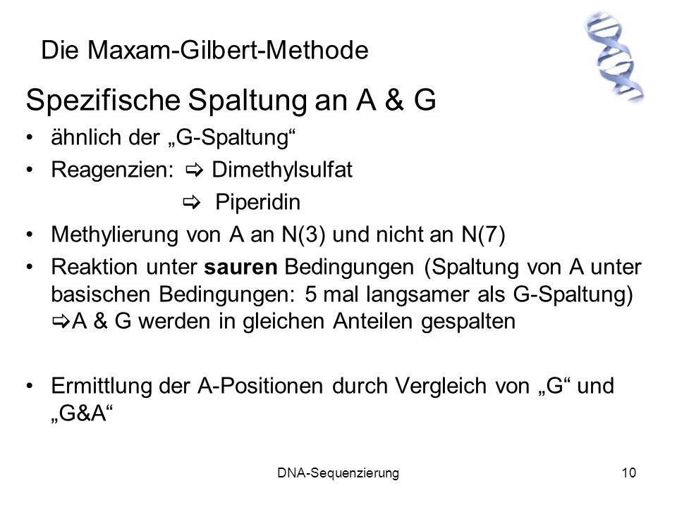 Die Maxam-Gilbert-Methode